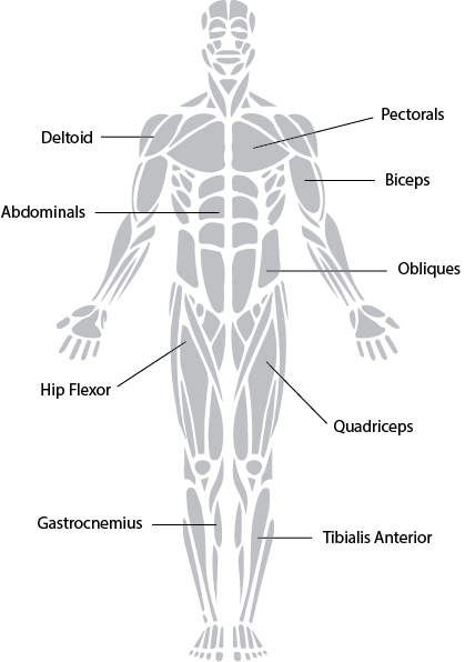 skeletal muscle physiology exercise 16b Start studying lab 16b - skeletal muscle physiology learn vocabulary, terms, and more with flashcards, games, and other study tools.