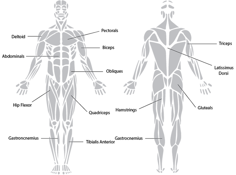 Unit 4 Musculo Skeletal System
