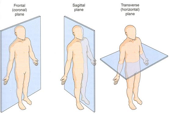 Unit 6 Analysis Of Movement